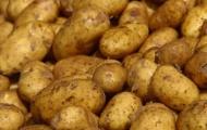 Украина останется без картофеля?