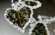 Украину ожидают заморозки