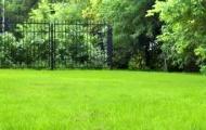 Семена газонных трав для дачи: виды трав для газона, когда сеять, смеси