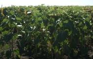 Выбираем средства защиты растений: оригиналы, дженерики и подделки