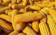 Экономичные авто вредят кукурузе в США